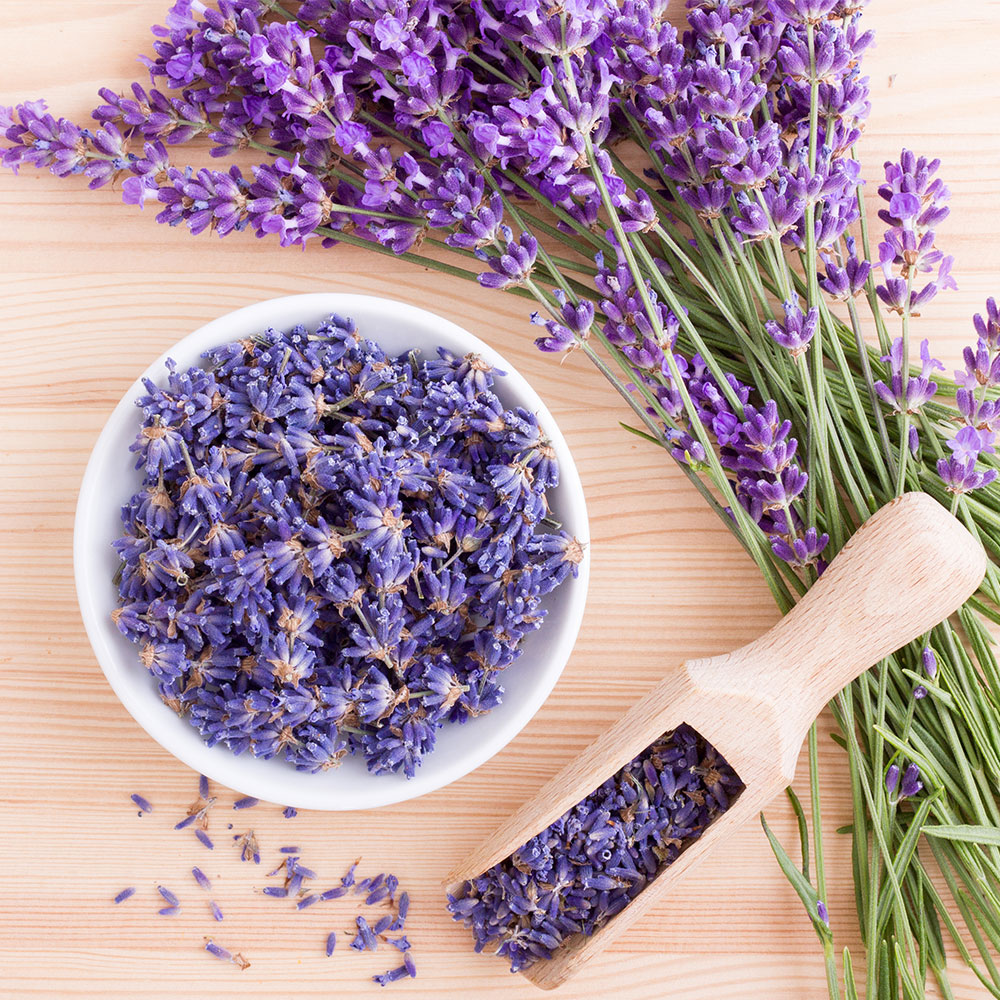 Olfactory Options - Lavender